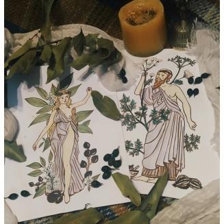 Ilustración original de la carta : Amapola